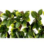 Nortene Flexigreen  Apácarács PE levelekkel 1x2 m