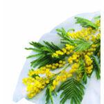 Nortene HIVERTEX PP átteleltető növénytakaró, 1 x 10m, 45 g/m²