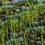 Műanyag, zöld gyeprács, 50x50x4 cm, zöld