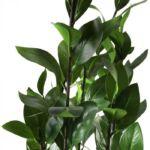 New Garden feltörő ficus műnövény 120 x 40 cm