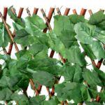 Borostyánleveles műsövény 2m2