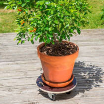 Nortene Flora Roll Strong növény alátét