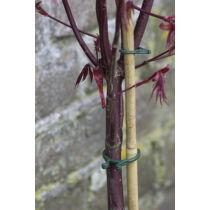 Nortene Vegring könnyen nyíló növénykapocs 40db/csomag