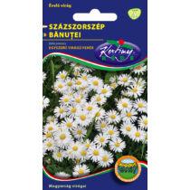 Rédei Kertimag Egyszerűvirágú Fehér Százszorszép vetőmag 0,2g