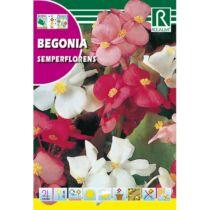 Rocalba Begónia Semperflorens 0,1 g