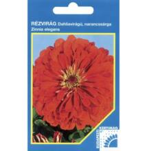 Budapesti Kertimag Rézvirág Dahlia virágú,narancssárga vetőmag 100 szem