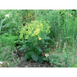 Nortene Chelsea félkör alakú növénykaró